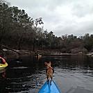 Brie - kayaking Chihuahua