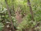 Big Shoals Florida Trail