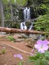 L 89671946f5a3452ba41b15c4d81205c0 by Father Dragon in Views in Virginia & West Virginia