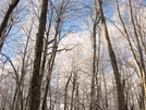 Jones Meadow Through Big Firescald Knob