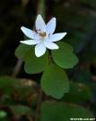 Wild Flower on Rich Mtn