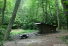 Curley Maple Shelter