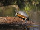 Turtle (flt 2010) by K.B. in Florida Trail