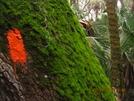 Orange Blaze On A Green Tree (flt 2010) by K.B. in Florida Trail