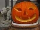 Happy Halloween! by K.B. in Faces of WhiteBlaze members