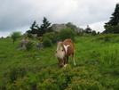 2009-0604f Grayson Highland State Park04