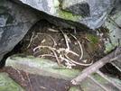 2009-0916d Bones Of A Dead Moose In Mahoosuc Notch