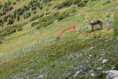 20100812a Colorado Trail - A fox by Highway Man in Members gallery