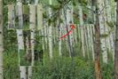 20100823a Colorado Trail - A Bear Encounter