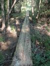 Tuxachanie Trail (desoto National Forest) by SMSP in Other Trails