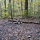 Camp Sites Near Little Dogwood Run, PA, 10/06/12 by Irish Eddy in Views in Maryland & Pennsylvania
