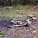 Camp Site Near A.T.-White Rocks Trail, PA, 10/06/12 by Irish Eddy in Views in Maryland & Pennsylvania