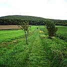 A.T. On Farm Land Near Boiling Springs, PA, 10/06/12 by Irish Eddy in Views in Maryland & Pennsylvania
