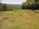 Power Line Crossing North Of Buzzard Peak, Pa, 05/30/10 by Irish Eddy in Views in Maryland & Pennsylvania