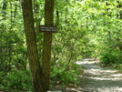 Access Trail To Annapolis Rock, Md, 05/23/09 by Irish Eddy in Views in Maryland & Pennsylvania