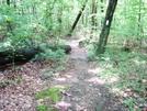 A.t. South Of Warner Gap Hollow, Md, 06/06/09 by Irish Eddy in Views in Maryland & Pennsylvania