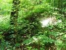 A. T. South Of Warner Gap Hollow, Md, 06/06/09 by Irish Eddy in Views in Maryland & Pennsylvania