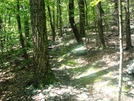 A. T. North Of Warner Gap Road, Md, 06/06/09 by Irish Eddy in Views in Maryland & Pennsylvania