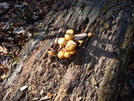 Interesting Mushrooms, Md, 11/07/09 by Irish Eddy in Views in Maryland & Pennsylvania