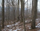 A. T. North Of Deer Lick Run, P A, 01/16/10 by Irish Eddy in Views in Maryland & Pennsylvania