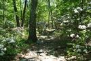 Hooligan And Paddy Near Buzzard Peak Summit, P A, 05/30/10 by Irish Eddy in Views in Maryland & Pennsylvania