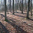 Camp Site North Of Woodrow Road Crossing, PA, 11/25/11 by Irish Eddy in Views in Maryland & Pennsylvania