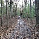 A.T. On Little Rocky Ridge, PA, 11/25/11
