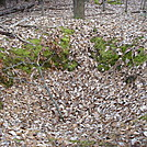 Foxholes On Piney Mountain, PA, 12/30/11 by Irish Eddy in Views in Maryland & Pennsylvania