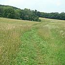 Open Land Near Millers Gap Road, PA, June 2015