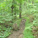 Side Trail to Darlington Shelter on Blue Mountain, PA, June 2015 by Irish Eddy in Views in Maryland & Pennsylvania