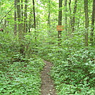 Trail Junction on Blue Mountain, PA, June 2015 by Irish Eddy in Views in Maryland & Pennsylvania