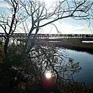 Assateague Island National Seashore: Life of the Marsh Trail