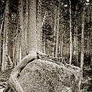 An intetresting tree.