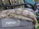 Timber Rattlesnakes by Slack-jawed Trog in Members gallery