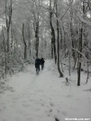 Approaching Mt Cammerer Trail by Tn Bandit in Trail & Blazes in North Carolina & Tennessee