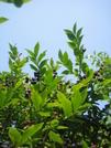 Blueberries by JJJ in Views in Virginia & West Virginia