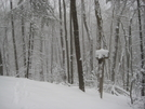 12/19/09 North Of Damascus by JJJ in Trail & Blazes in Virginia & West Virginia