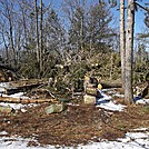Fallen Pine Trees Atop Summit of Mount Minsi (1,461 feet) in Pennsylvania