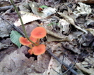 Orange Shrooms by joeboxer in Other Trails