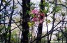 Flame Azalea by chris in Flowers