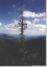 Dead Tree by chris in Trail & Blazes in North Carolina & Tennessee