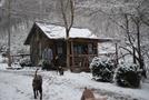 Standing Bear Farm, Snow 2-22-09 by slow roasted in Hostels