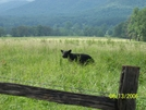 Cades Cove by hikerdaddy in Views in North Carolina & Tennessee