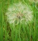 Seeds by ShoelessWanderer in Flowers