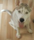 My Dog Chief by kygal89 in Members gallery