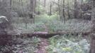 Chief Benge Trail by vamelungeon in Trail & Blazes in Virginia & West Virginia