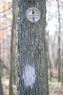 White Blaze And Pa Forest Marker by knightjh in Trail & Blazes in Maryland & Pennsylvania