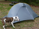 My Tent Inspector by Engine in Tent camping