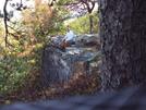 Tinker Cliffs by Menace in Trail & Blazes in Virginia & West Virginia