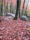 Red Path by Lead Dog in Trail & Blazes in Virginia & West Virginia